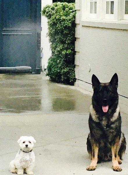Gwyneth Paltrow's dogs